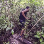 La jungle est dense !