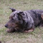 Un chien abandonné...