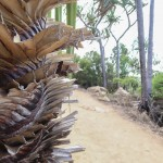 Drôle de palmier