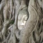 La célèbre tête de Buddha enchevêtrée