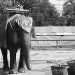 Le pays des éléphants